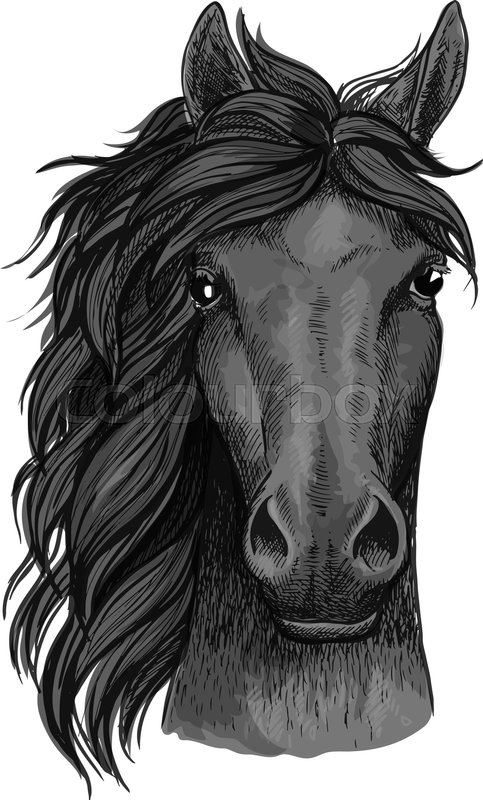 483x800 Horse Full Face Artistic Portrait. Mustang Stallion With Mane