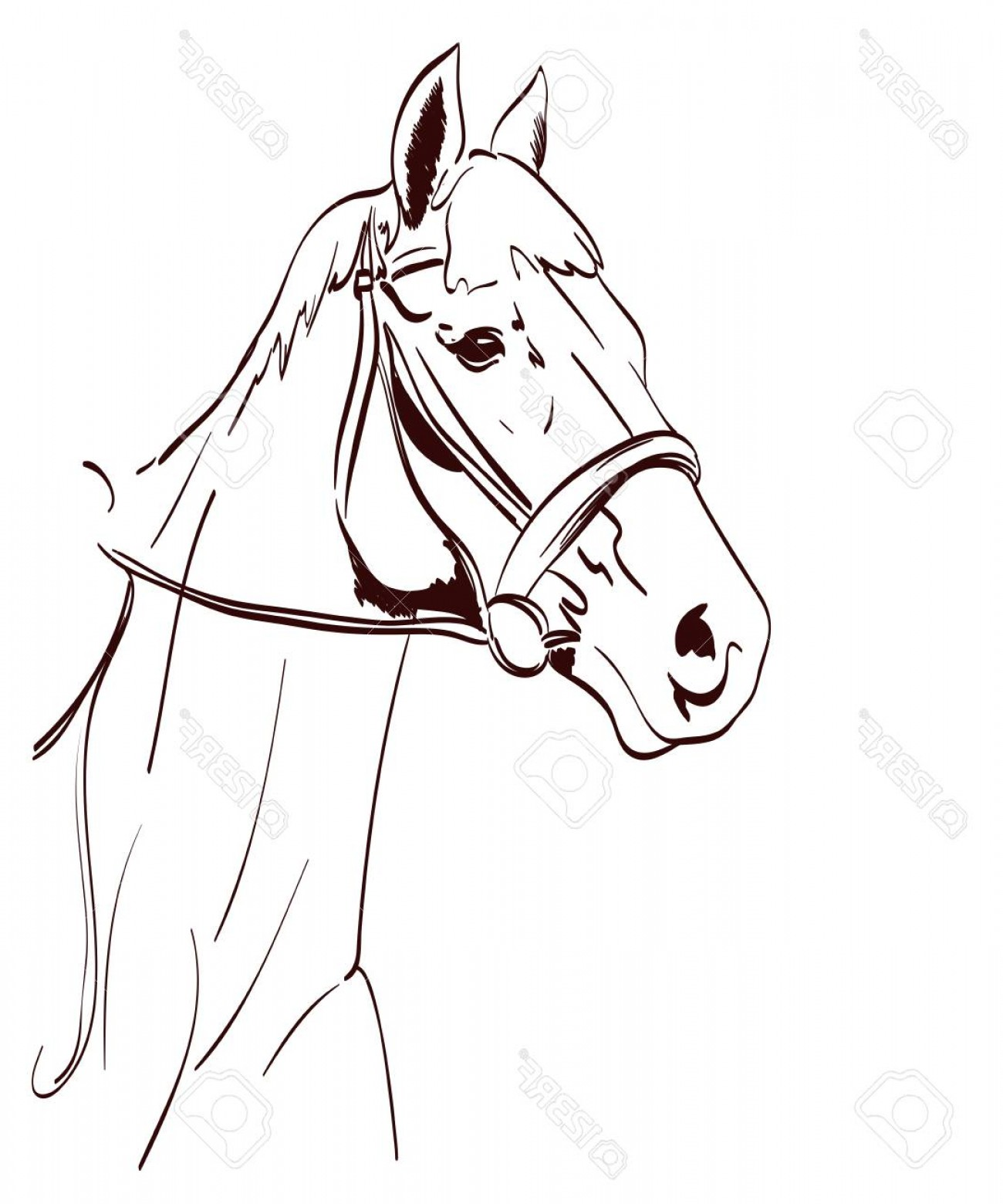 1300x1560 Photostock Vector Horse Head Vector Illustration In Line Art Style