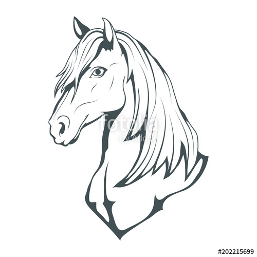 500x500 Horse. Hand Drawn Horse. Sketch Of Horse Head. Vector Artwork