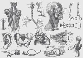 286x200 Human Anatomy Free Vector Art
