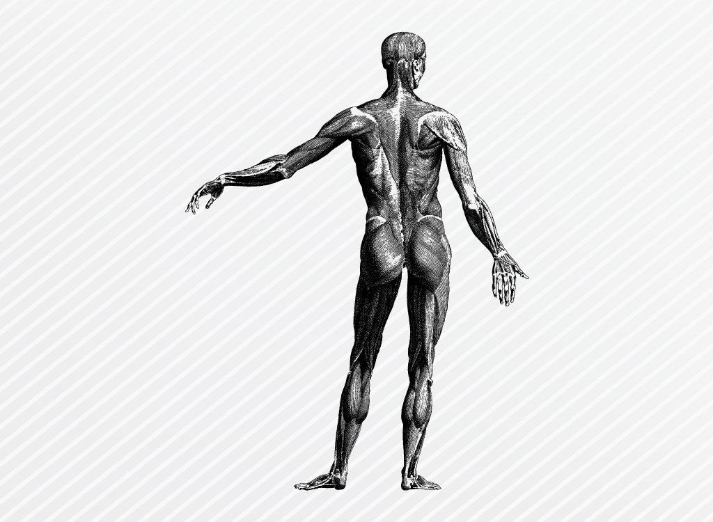 1024x750 Human Anatomy Graphics
