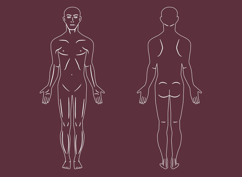 1024x750 Human Body Vectors