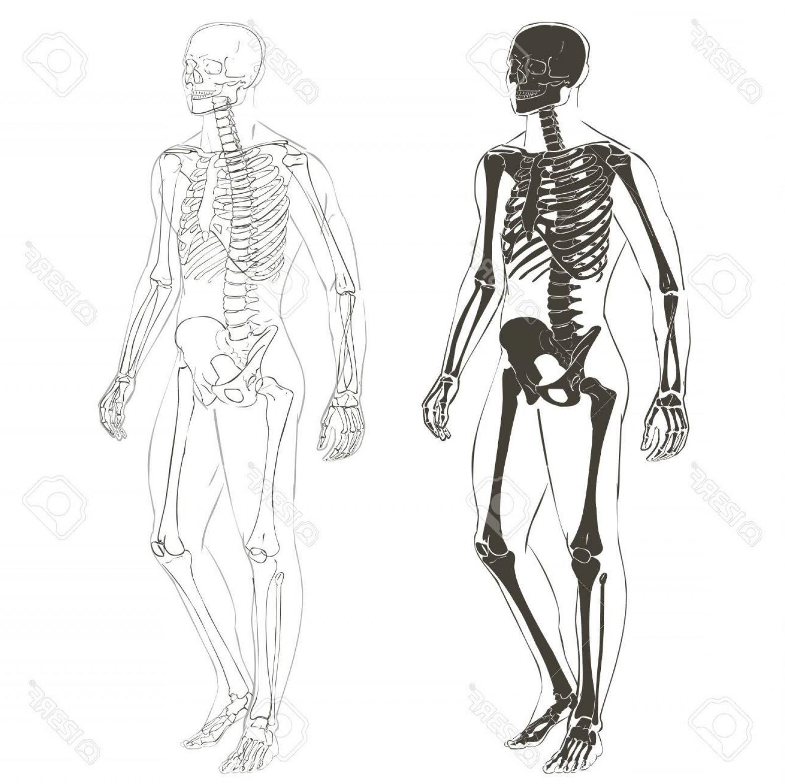 1560x1558 Photostock Vector Human Body Parts Skeletal Man Anatomy Vector