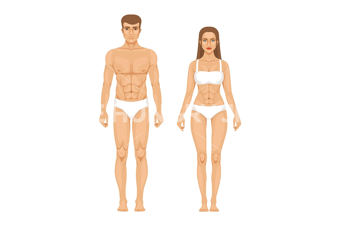 1160x772 Woman Body Parts. Human Anatomy Vector Illustrations Isolate On