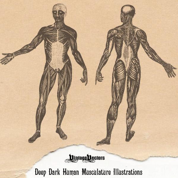 600x600 Vector Art Deep Dark Human Muscular Figures Illustration