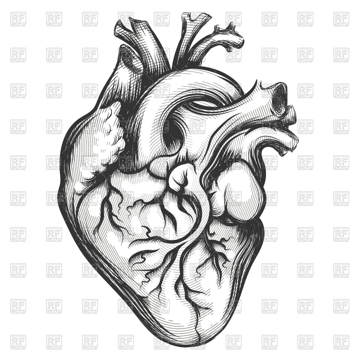 1200x1200 Human Heart Drawn In Engraving Style Vector Image Vector Artwork