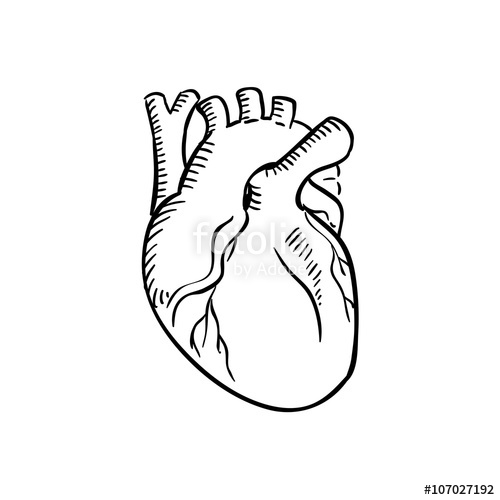 500x500 Isolated Human Heart Outline Sketch Stock Image And Royalty Free