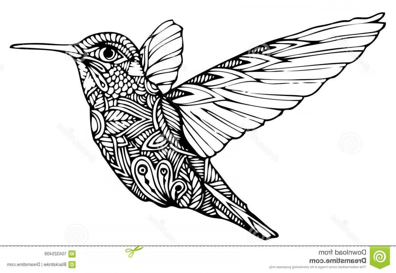 1560x1075 Zentangle Hummingbird Vector Zentangle Vector File Authentic