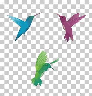 Hummingbird Vector Free