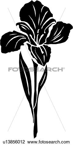238x470 Collection Of Iris Flower Clipart Black And White High