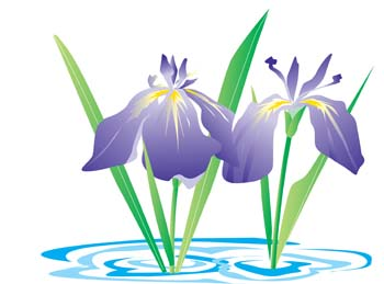 350x259 Free Download Of Iris Flower 3 Vector Graphic