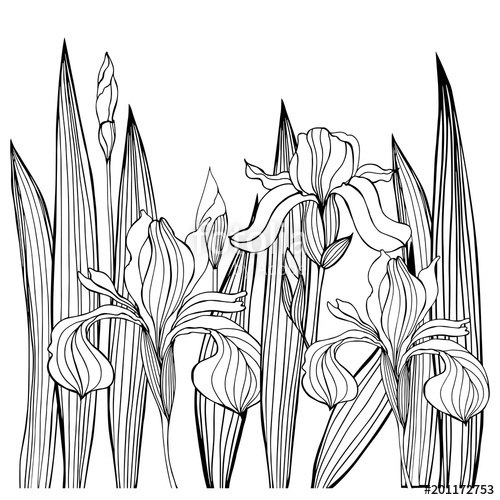 500x500 Hand Drawn Iris Flowers.vector Sketch Illustration Stock Image