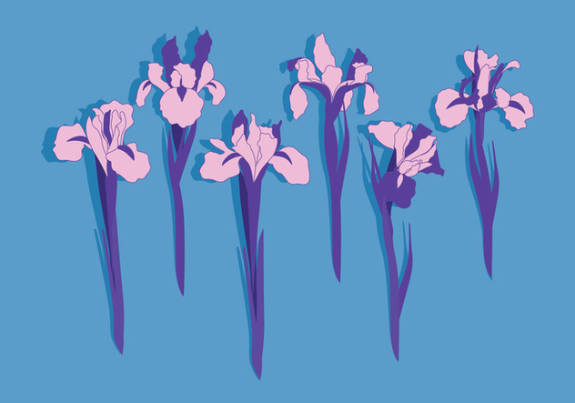 632x443 Iris Flowers Vector Free Vector Download 435029 Cannypic