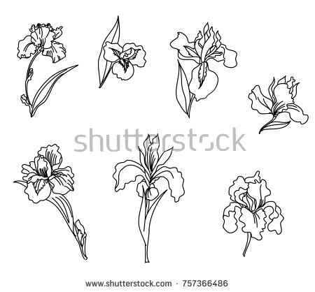450x418 Collection Of Iris Flower Line Drawing High Quality, Free
