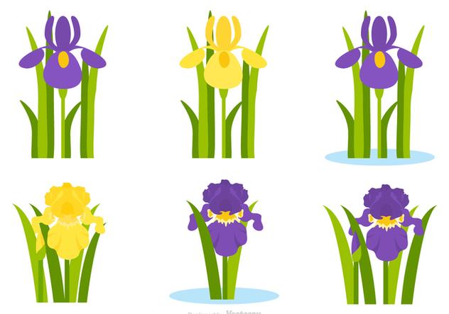 632x443 Du Vecteur Gratuit Flat Purple And Yellow Iris