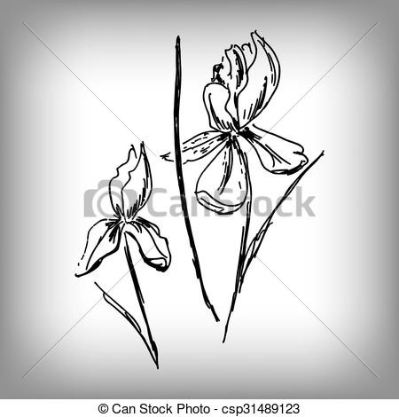 450x470 Vector Iris Flower. Illustration By Hand. Monochrome Drawing