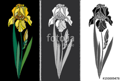 500x334 Vector Set With Embroidery Iris Flower In Pastel Yellow, Black And
