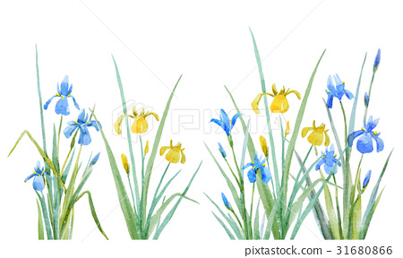 450x288 Watercolor Iris Flowers Vector Composition