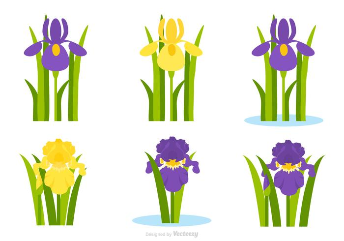 700x490 Flat Purple And Yellow Iris Flower Vector Set