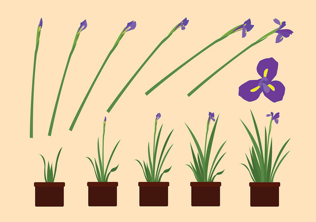 632x443 Iris Flower Grow Free Vector Free Vector Download 435601 Cannypic