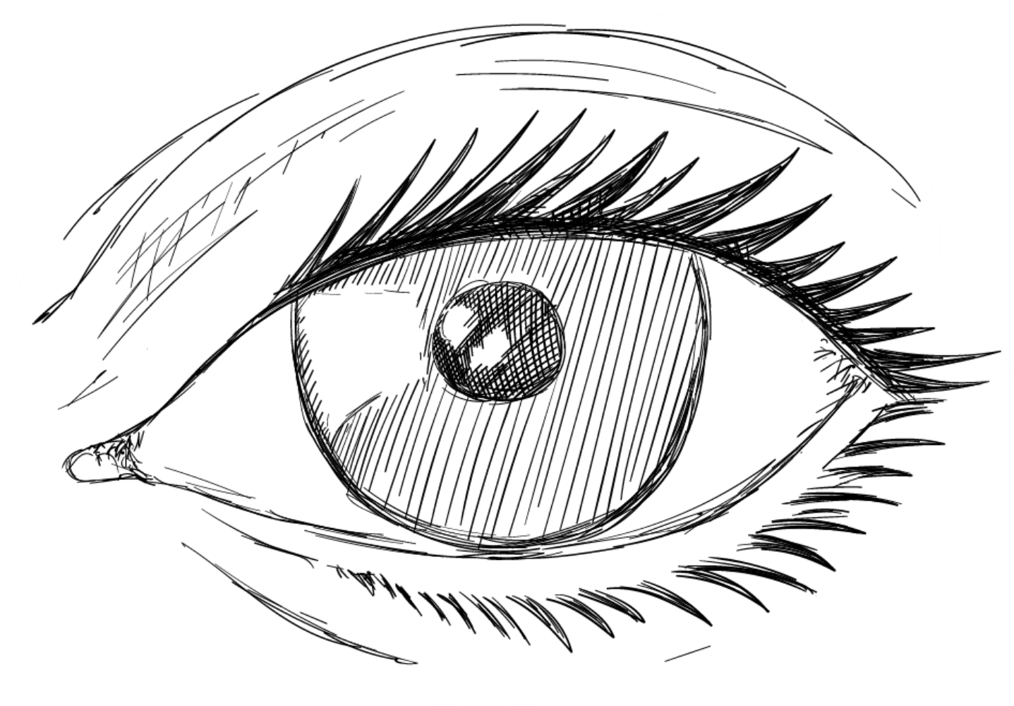 1437x1000 19 Iris Vector Sketch Huge Freebie! Download For Powerpoint