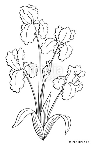 313x500 Iris Flower Graphic Black White Isolated Bouquet Sketch