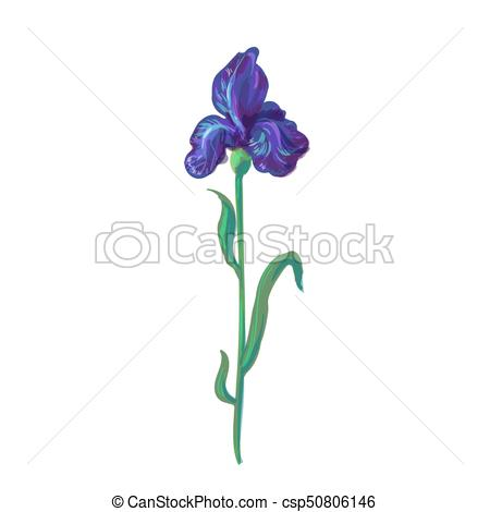 450x470 Vintage Iris Vector Hand Drawing Isolated On White Background