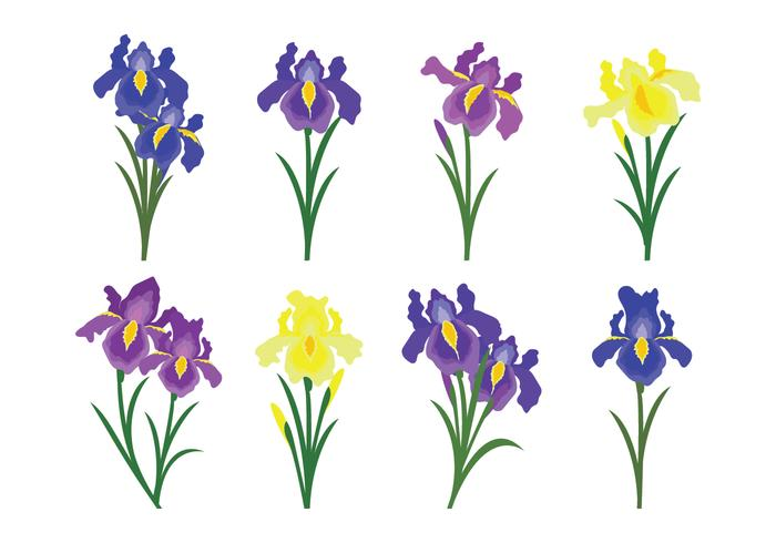 700x490 Beautiful Iris Flower Vector Icons