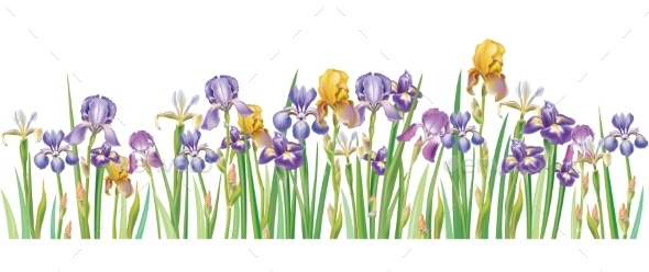 590x248 Border With Multicolor Vector Irises By Wikki33 Graphicriver