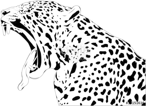 500x364 Jaguar Yawn Stock Image And Royalty Free Vector Files On Fotolia