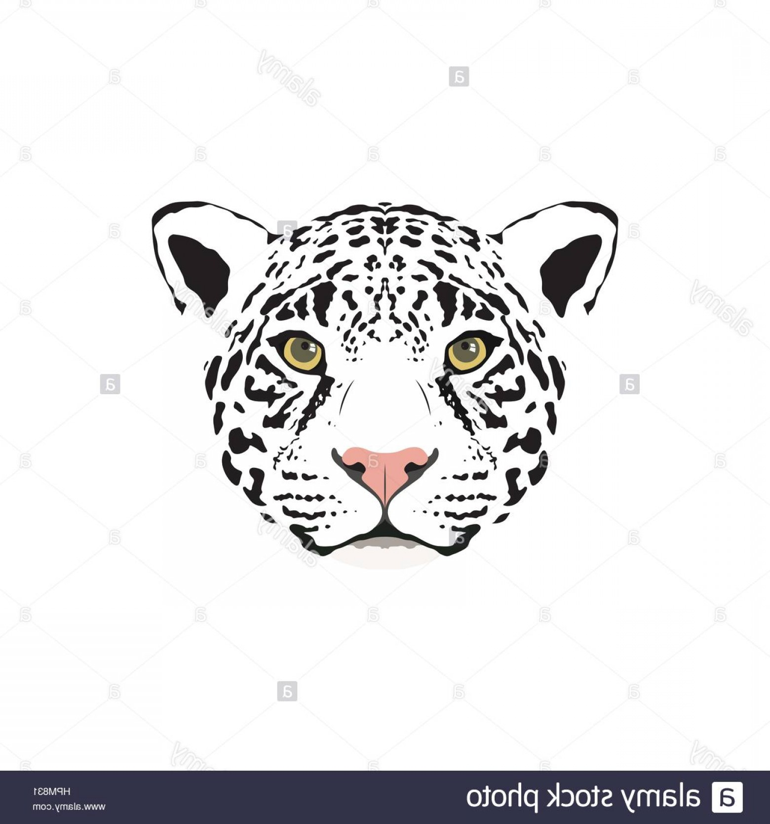 1560x1668 Stock Photo Vector Illustration Of A White Jaguar Head Suitable As
