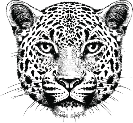 430x398 Jaguar Vector 11 An Images Hub