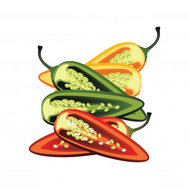 626x626 Slices Of Raw Jalapeno Pepper. Vector Illustration Vector Free