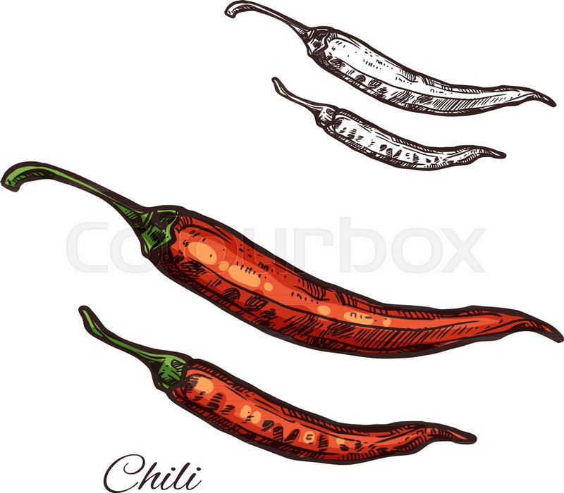800x700 Chili Pepper Seasoning Spice Herb Sketch Icon. Vector Isolated Red