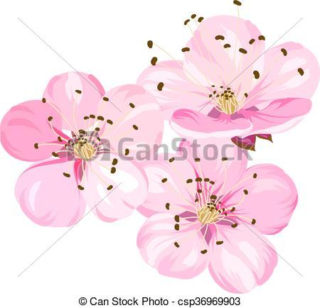 450x434 Sakura Japan Cherry Branch With Blooming. Cherry Blossom