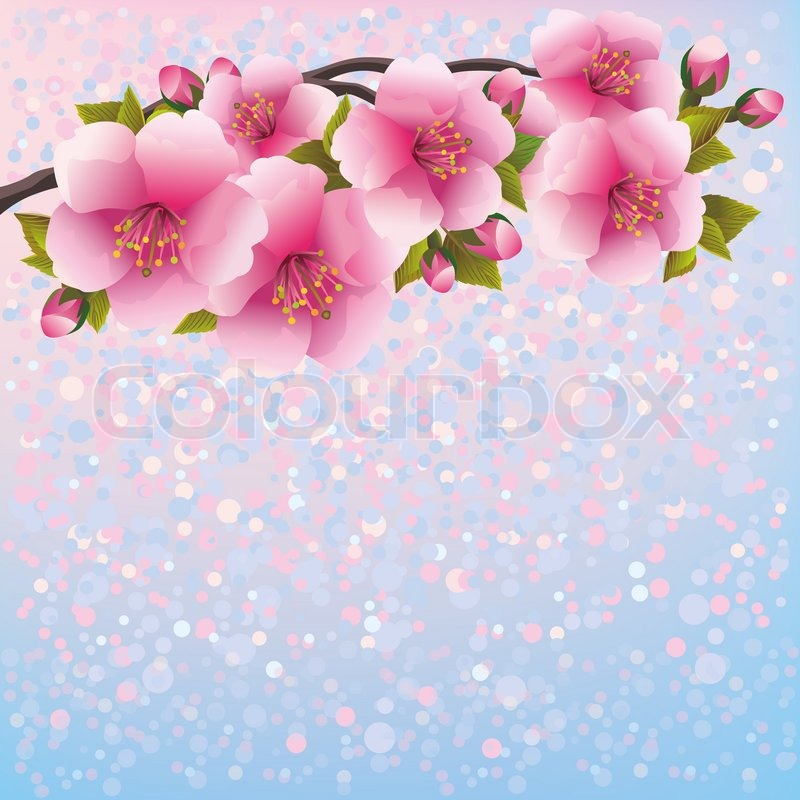 800x800 Purple Background With Sakura Blossom Japanese Cherry Tree Stock