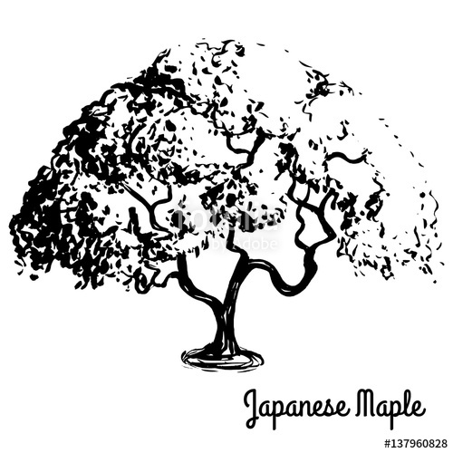 500x500 Vector Sketch Illustration. Black Silhouette Of Japanese Maple