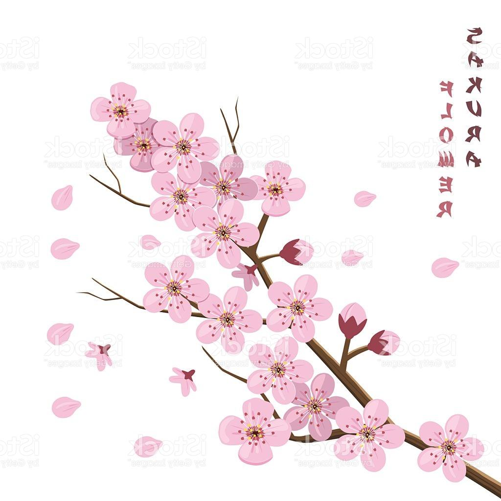1024x1024 Best Hd Japanese Cherry Blossom Tree Art Vector Images