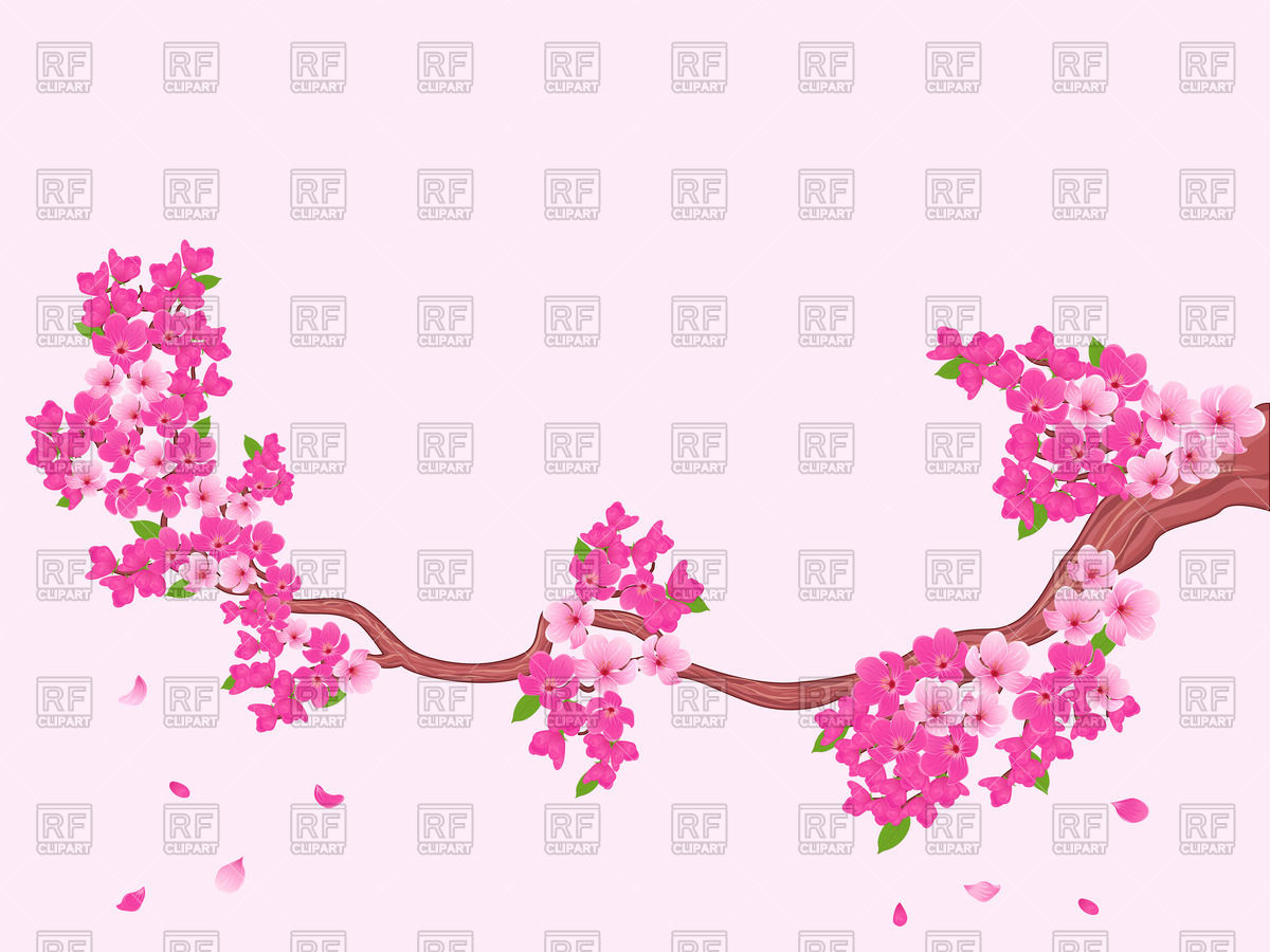 1200x900 Blooming Sakura Branch