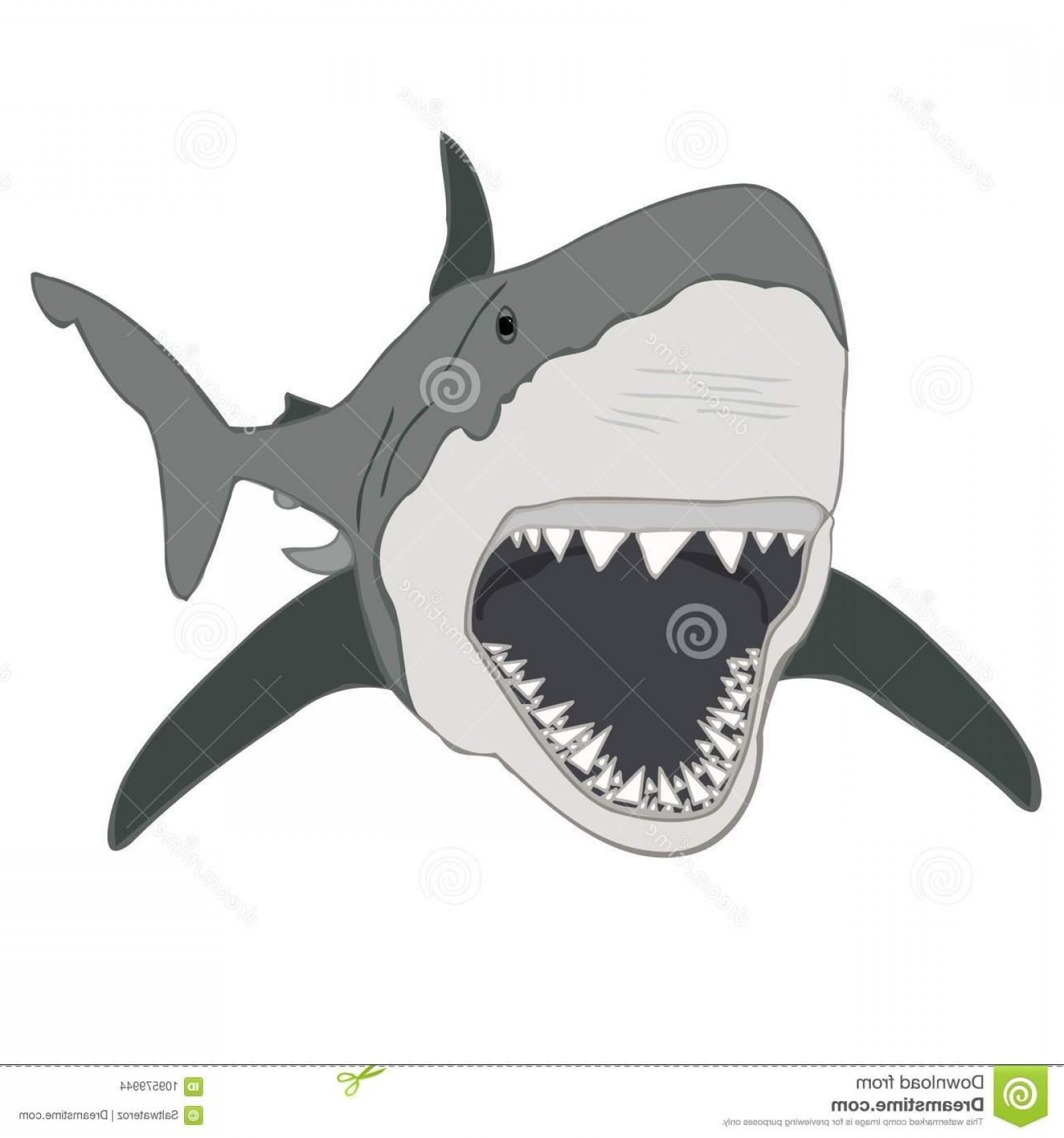 1560x1668 Great White Shark Vector Isolated White Shark Jaws Shark Teeth