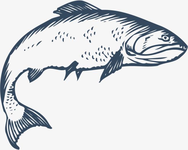 650x520 Crooked Fish, Fish Vector, Fish Clipart, Jumping Fish Png And