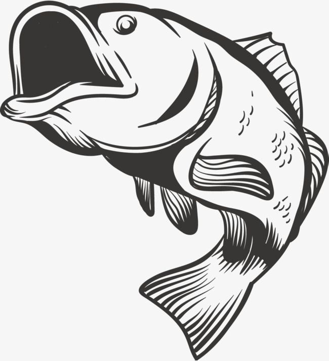 650x714 Grey Carp, Jumping Fish, Jump Up, Fish Png And Vector For Free