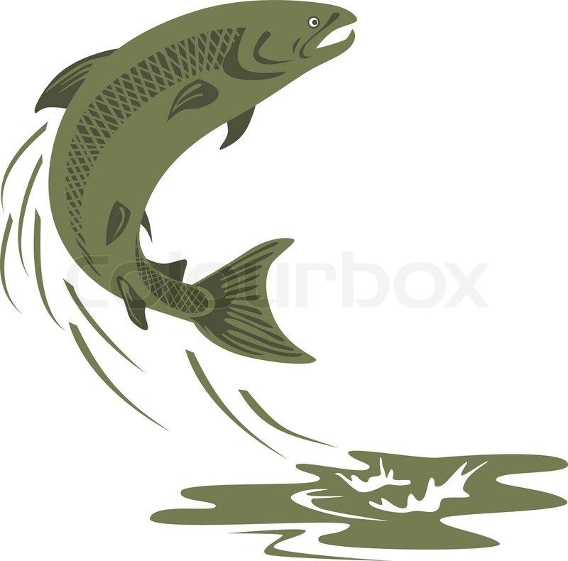 800x790 Trout Fish Jumping Retro Stock Vector Colourbox