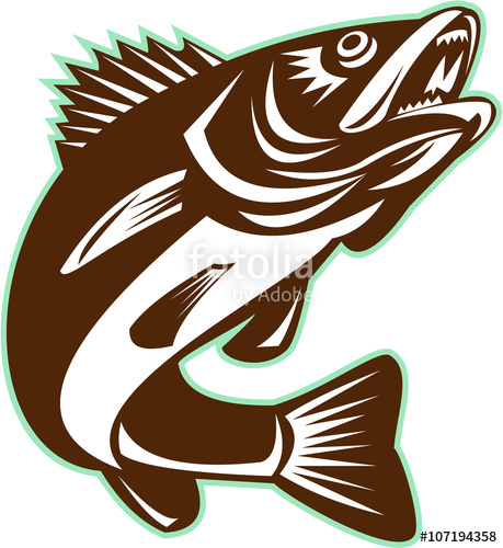 459x500 Walleye Fish Jumping Isolated Retro Stock Image And Royalty Free