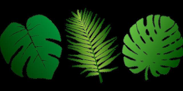 640x320 Png Jungle Leaf Transparent Jungle Leaf.png Images. Pluspng