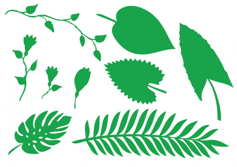 800x565 Jungle Leaves Clipart Jungle Plant Leaves And Flowers Vector