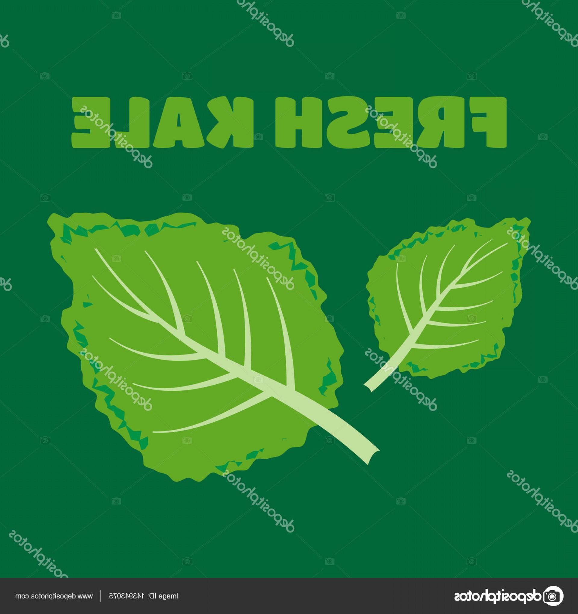 1920x2040 Stock Illustration Fresh Kale Vector Illustration Fresh Sohadacouri
