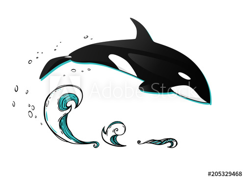 500x365 Jumping Killer Whale. Vector Graphic Illustration. The Whale Above