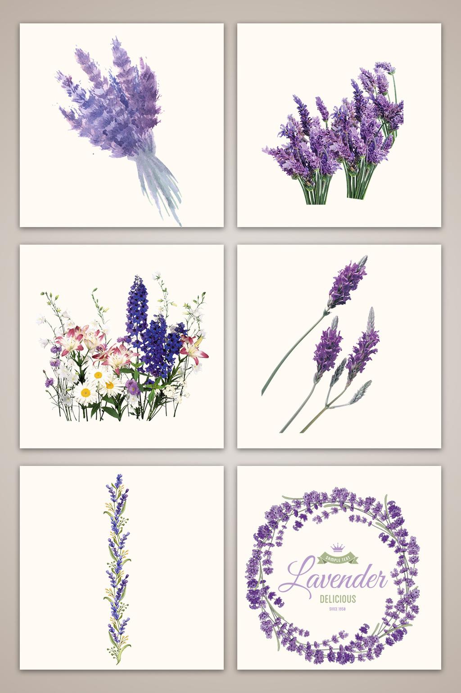 Lavender Vector Free