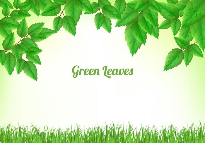 700x490 Green Leaves Background